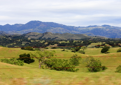 Los Olivas Wine Hills