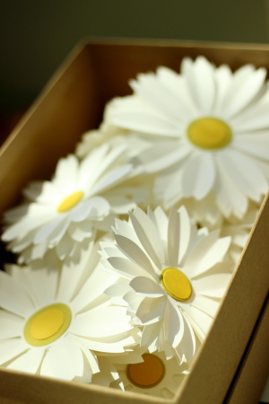 Paper Source Daisies