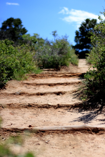 Timber Creek Trail